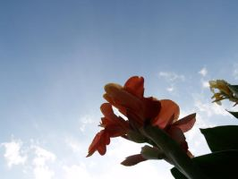 flower, sky by TheUnknown860