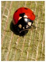 The Ladybird by XxXBiancaXxX