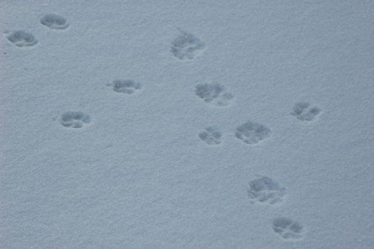 Footprints by MariAnnS