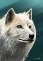 Wolf by AliceYung