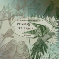 Parrots and parakeets by libidules