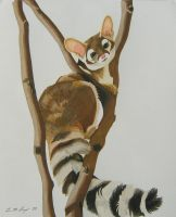 Ringtail by WindSong83