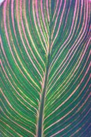 The Patterns of Plants 3 by GothicaDollParts