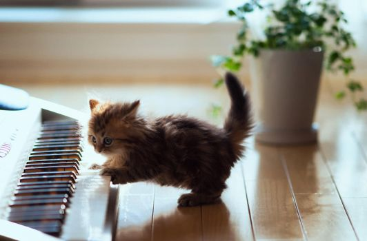 kitten likes the piano! by xxhaileywillxx