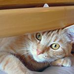 Pop out Lucy! by lucytherescuedcat