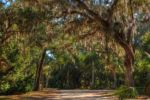 Tomoka Oak revisited by BobX327