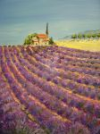 Provence by emialc