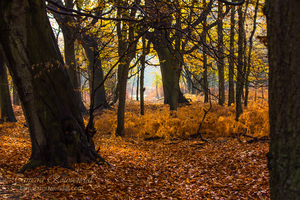 Orange forest 2 by TammyPhotography