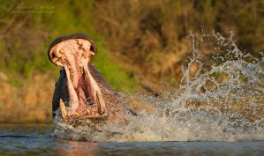 Bigmouth is Angry! by MorkelErasmus