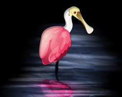 Day 18 - Roseate Spoonbill by ACampion