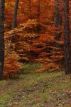 autumn 2009 - 7 by Eufrosis