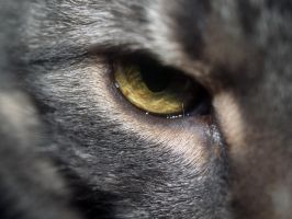 cat eye - stock by oldpost-stock