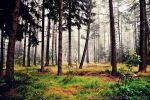 magic forest No.11 by landscapesaxony