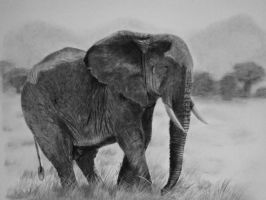 African Elephant by Living-Elixier