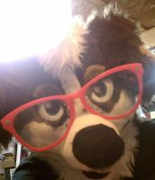 Hipster Collie by ZinStone