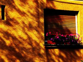 Flowers on the windowsill by DD-a