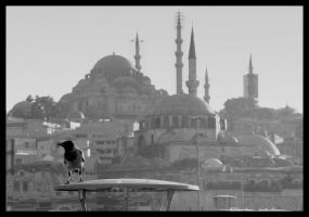 The Crow of Istanbul City by museby
