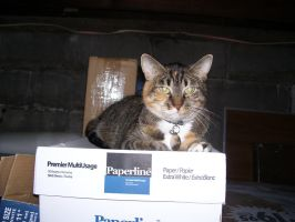 Laura on a box (Two) by Hannah2070