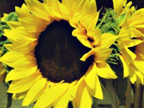 Smiling sunflower by b14nc4