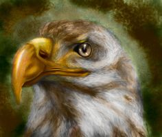 The eagle by lamAble