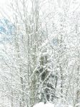 Tree under snow by Soft-stock