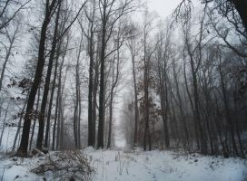 Misty Woodland. by MateuszPisarski