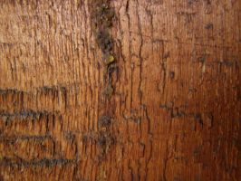 Wood texture 002 by AnnFrost-stock