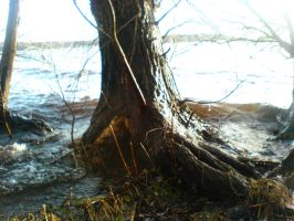 TREES in High Water STOCK IX by ChaosStocks