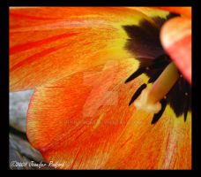 Giant Speckled Tulip II by Jenna-Rose