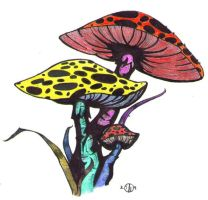 Shrooms by smmfd