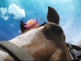 Horse with Flower by dressageart13