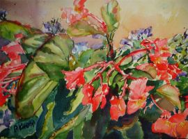 Begonia by p-e-a-k