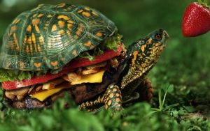 Turtle burger by Frontside92