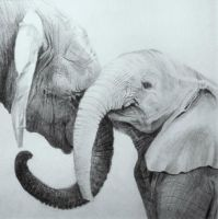 Grey elephants by ficus