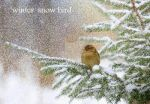 christmas  contest  ****snow bird by rochele10