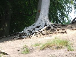 Tree Roots 2 by TimeWizardStock