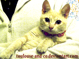 Tulus ID by Toulouse-and-Co