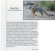 Gray Fox by sofijasoler