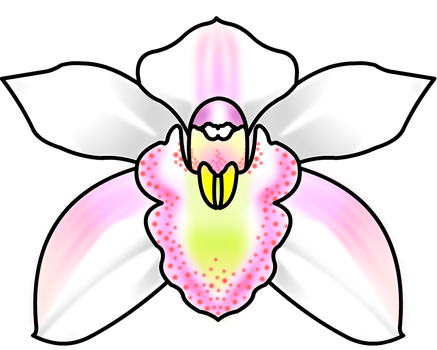 Orchid design 1 by xxSHEOLxx