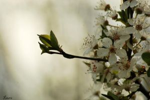 season of spring XIII by Lk-Photography