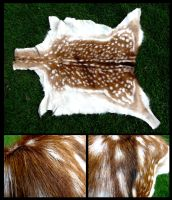 Fallow Deer Fawn Pelt by CabinetCuriosities
