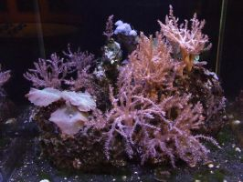 Coral Reef g by dtf-stock