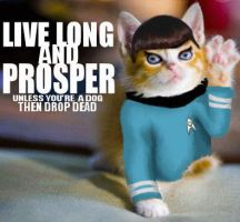Spock Kitty by PixelBunny