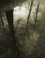 Fall's Reflection by WarpedPurity