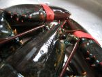 Lobster 02 by LithiumStock