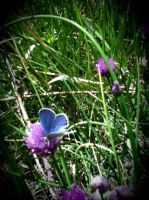 Blue Butterfly by MandaIrene