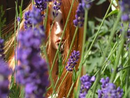 sun in lavender by Gilven