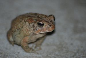 Toad by Larah88