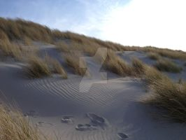 Dunes in Ameland by Bolero-lief