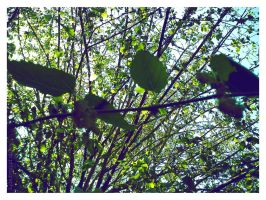 Nature IV - leaves the green by Vianto